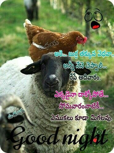 Sunday Funny Quotes In Telugu In 2020 Good Night Funny Funny Wishes Sunday Quotes