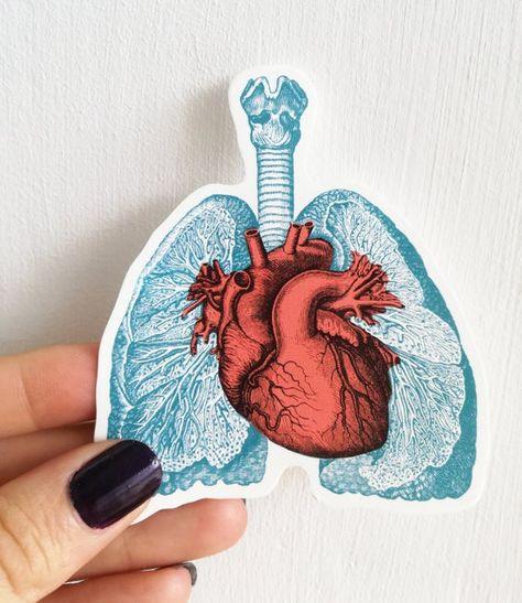 Coloridas pegatinas de anatomía pulmones y corazón pegatinas | Etsy