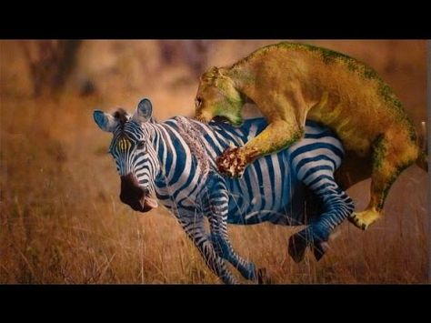 فيلم وثائقي عالم الحيوان اقوي مشاهد افتراس الحيوانات Hd Animals African Animals Wild Cats