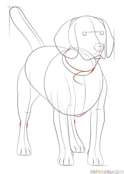 Beagles Drawing Beagles Drawing Beagles Zeichnen Dessin De