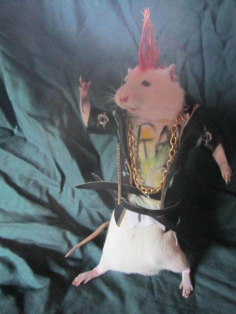 Taxidermy rat punk taxidermy rat punk cabinet of curiosity oditties