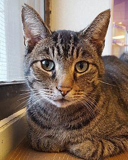 Bickford Cat Adoption Pets Pretty Cats