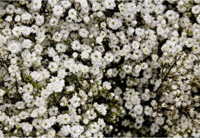 How To Cast A Spell A Guide For Beginners Magical Herbs Witch Herbs Babys Breath Flowers