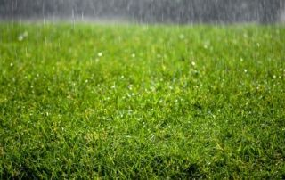Mowing Wet Grass Here Are The Top 20 Tips To Know Lime For