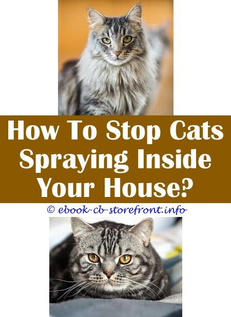 3 Splendid Tips Cat Antiseptic Spray Uk What Can I Use On My Cat For Skunk Spray Spayed Female Cat Spraying Cat Sprays Outside But He Dtinks Sensible Admirable