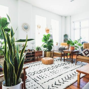 There Are More Plants Than Furniture In This Sunny New Zealand Loft Home Decor Decor Interior
