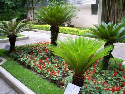 Tudo Em Flor Plantas Para Jardim Que Gostam De Sol Belos
