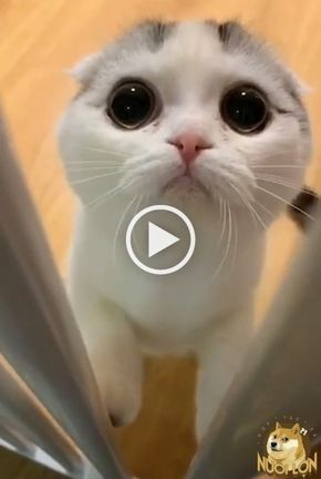 Cute Cats And Kittens Videos Click The Photo For More Adorable And
