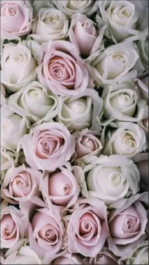 List Of Pinterest Walpaper Phone Vintage Tumblr Pink Roses Pictures