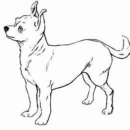 Chihuahua Dog Coloring Pages Printable Dog Coloring Page