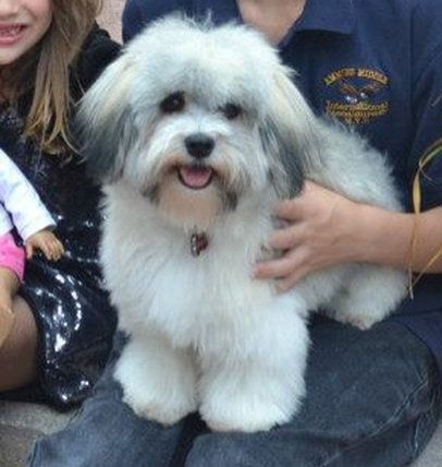Havanese Puppies For Sale Past Puppies With Images Havanese Puppies Havanese Puppies For Sale Havanese Dogs
