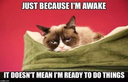 Super Funny Good Morning Memes Hilarious Grumpy Cat Ideas Funny Grumpy Cat Memes Grumpy Cat Grumpy Cat Good