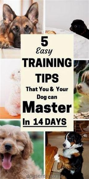 Long Dog Training Lead Dog Training Video Dog Training 53222