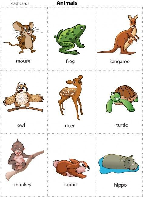 Cards For Kids Animal Cards For Children Learning English For Kids Animal Flashcards Animal Pictures For Kids