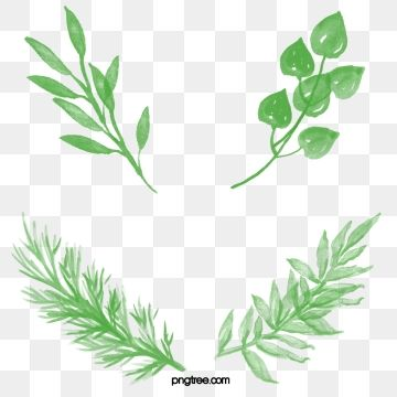 Watercolor Leaves Watercolor Clipart Leaf Green Leaf Png And Vector With Transparent Background For Free Download Watercolor Leaves Watercolor Watercolor Clipart
