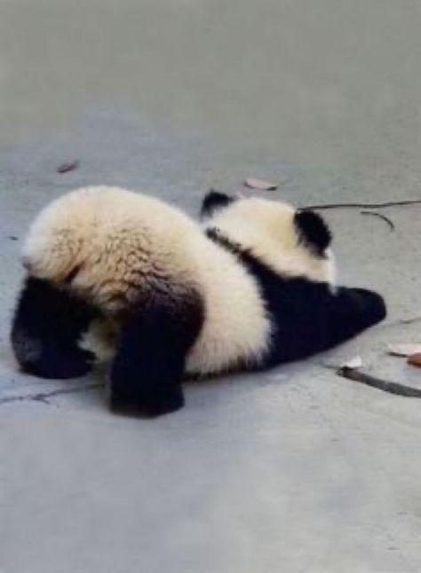 So Cute Baby, Baby Animals Super Cute, Cute Little Animals, Cute Funny Animals, Cute Cats, Cute Babies, Adorable Kittens, Cute Panda Baby, Big Cats