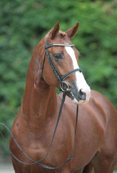 Pin Auf Horses