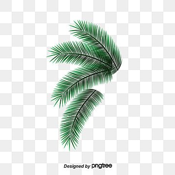 Green Vector Palm Leaves Png And Psd Palm Leaves Green Trees Tree Clipart