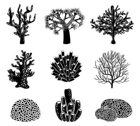 Pin On Coral Reef Ideas