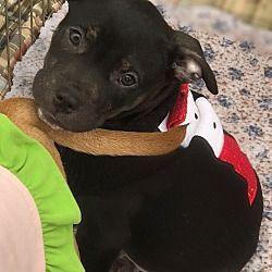 Detroit Mi Terrier Unknown Type Medium Meet Billy A Dog For