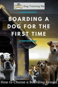 Pin By Anne Fahnestock On Dogs Dog Boarding Facility Dog