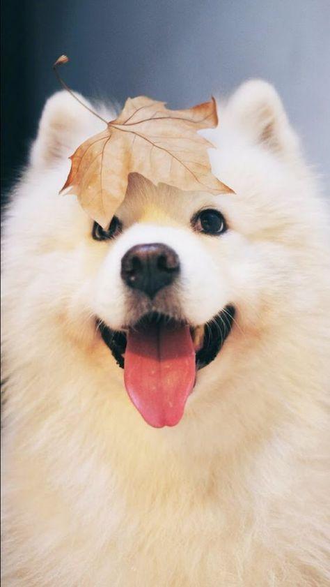 Pets; Dogs; Animal; Dog Breeds; Dog Funny; Dog Photography;Boxer Dog; Dog Stuff; Dog Training; Dog Memes;Dog And Puppies;Dog Tips;Family Members; Long-haired Dog