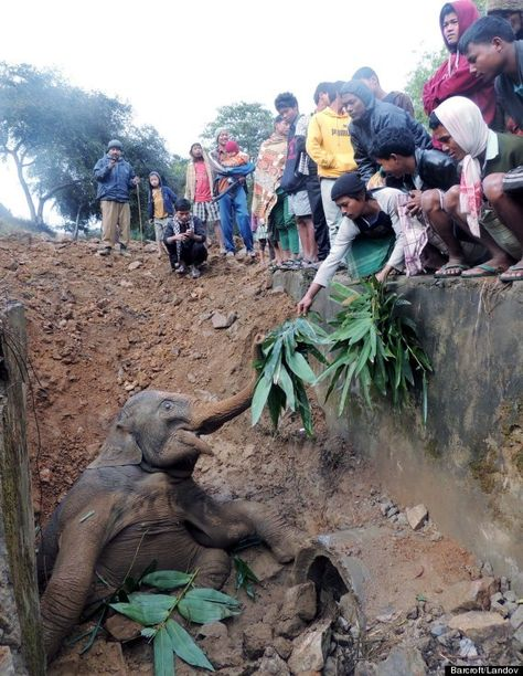 Baby Elephant Rescued From Ditch By Helpful Train Passengers (Faith In Humanity Restored)