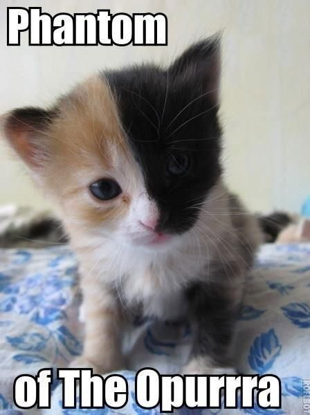 Erik X Reader One Shots The Cat Kociaki Kotki Smieszne Fotki
