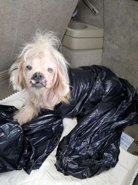 Little Walrus Dog Left At Shelter In Garbage Bag Animals Shih