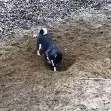 Dog.exe has crashed
