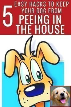 1 Have Dog Behavior Problems Learn About Potty Training A Puppy On Newspaper And Dog Training Courses Chicago Dog Behavior Puppy Classes Training Your Dog