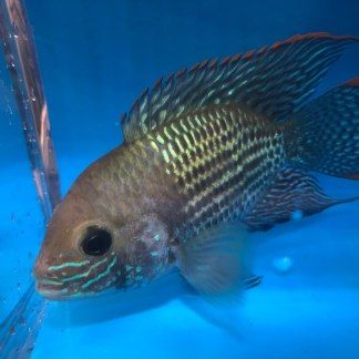 Exotic Fish Shop: Buy Freshwater & Aquarium Fish | Live Fish