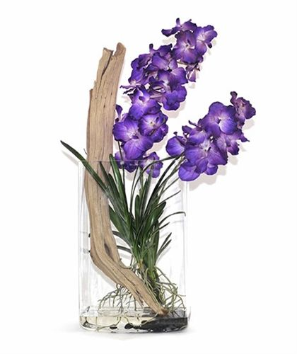 14 Best Vanda Images On Pinterest Orchids Orchid Flowers And Planting