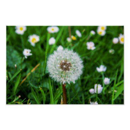 Dandelion Flower In Summer Poster Zazzle Com In 2020 Dandelion Flower Summer Poster Flowers