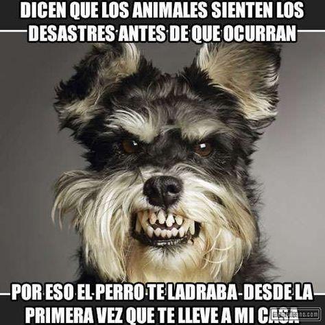 Humor La Solucion Para Hablar En Publico Memes Chistes Chistesmalos Imagenesgraciosas Humor Angry Dog Funny Dog Pictures Schnauzer Dogs