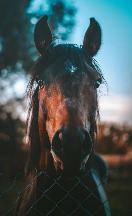 Brown Horse Photo Free Horse Image On Unsplash Horse Wallpaper Horses Cute Horses Brown horse wallpaper hd