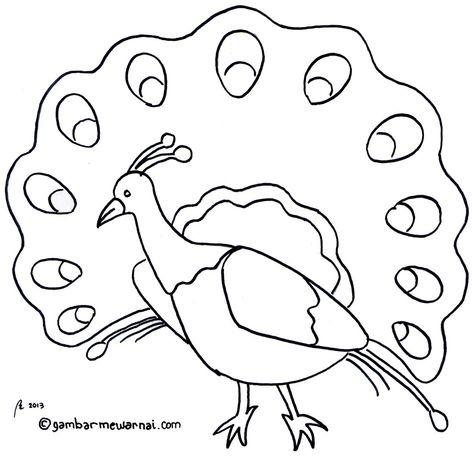 65+ Gambar Binatang Burung Untuk Kolase Gratis Terbaru