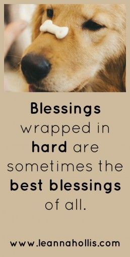 If we welcome the easy blessings, we must also be willing to embrace the hard ones, give thanks to the Author of both, and persevere until we reach the crown God has promised.#blessed #persevere #disciplelife #givethanks