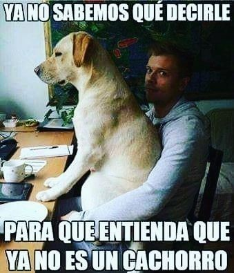 Siguenos En Instagram Mascotasdomesticas Perros Graciosos Memes Perros Perros Chistosos