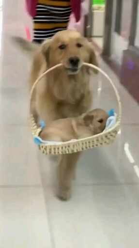 Buy Instagram Impressions Cute Baby Dogs Cute Baby Animals