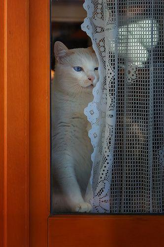 Pin On Lace Curtain Felinity