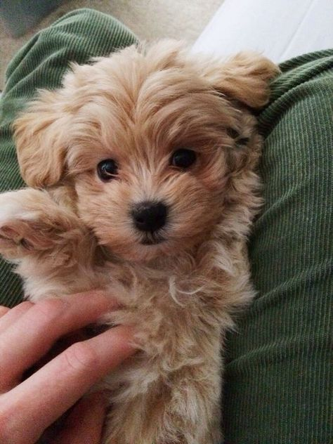 cute dogs and puppies drawing Super Cute Puppies, Cute Little Puppies, Cute Little Animals, Cute Dogs And Puppies, Cute Funny Animals, Baby Dogs, Doggies, Pet Dogs, Cute Fluffy Puppies