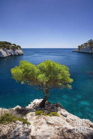 Lone Pine Tree Growing Out of Solid Rock, Calanques Near Cassis, Provence, France Photographic Print