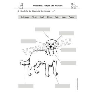 Haustiere Werkstatt Mit Bildern Haustiere Tiere Zootiere