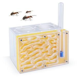 DIY with feeding area ant nest insect ant farm acryl