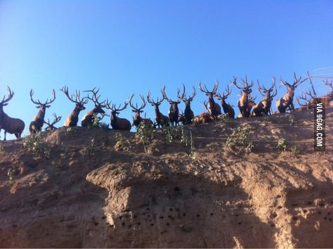 Elk Farm near Twin Falls Idaho and YES it is real shot, Mule Deer Hunting, Coyote Hunting, Pheasant Hunting, Whitetail Hunting, Whitetail Bucks, Archery Hunting, Hunting Humor, Hunting Stuff, Elk Pictures