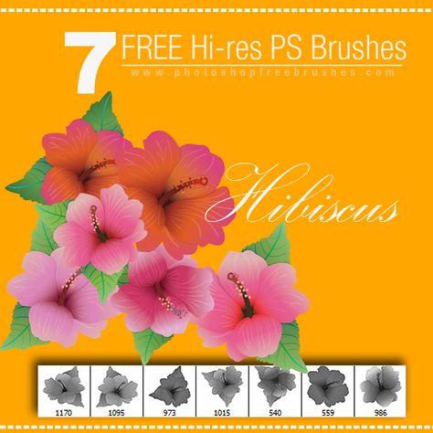 Free And Fantastic Hibiscus Flower Photoshop Brushes Hibiscus Hibiscus Flowers Paint Shop