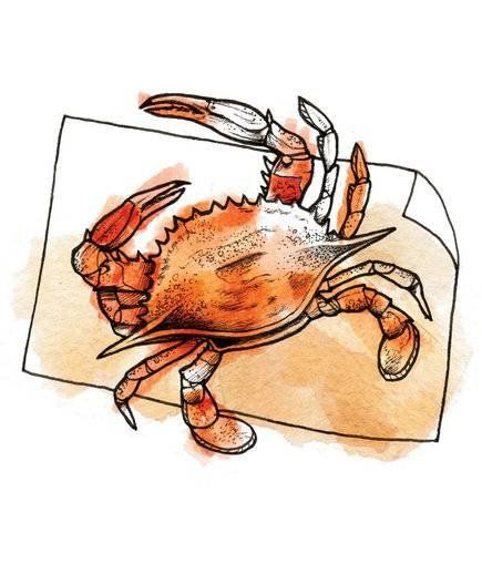 How To Catch Crabs And Eat Crabs In The Holiday Eat Food Crab