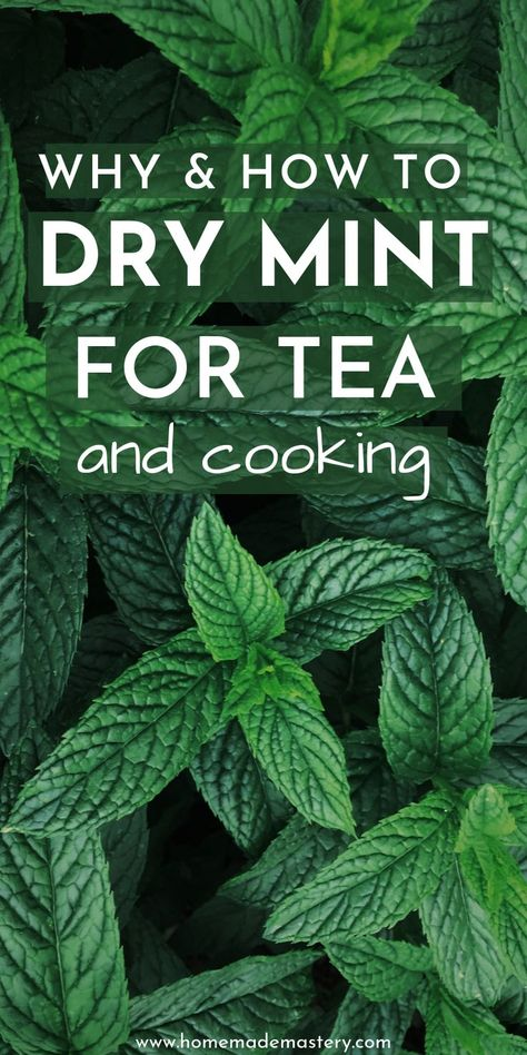 How to dry mint for tea and cooking! Drying your own mint leaves in the oven, or airdrying is easy and will provide you with high-quality dried mint leaves! Drying Mint Leaves, Fresh Mint Leaves, Uses For Mint Leaves, Mint Leaves Recipe, Benefits Of Mint Leaves, Mint Plant Uses, Fresh Mint Tea, Mint Recipes, Herb Recipes