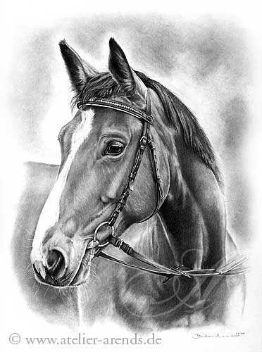 ausmalbilder pferde hannoveraner  amorphi